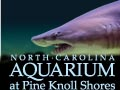 North Carolina Aquarium at Pine Knoll Shores Emerald Isle Attractions